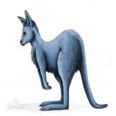 kangooblue90