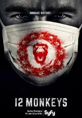 Poster de 12 monos (Doce monos)